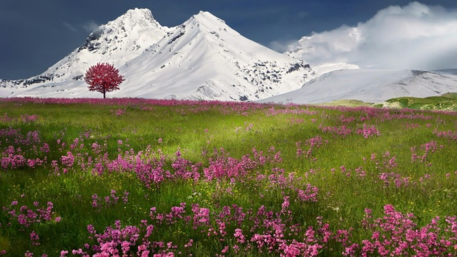Flowers In Mountain Valley HD Desktop Background
